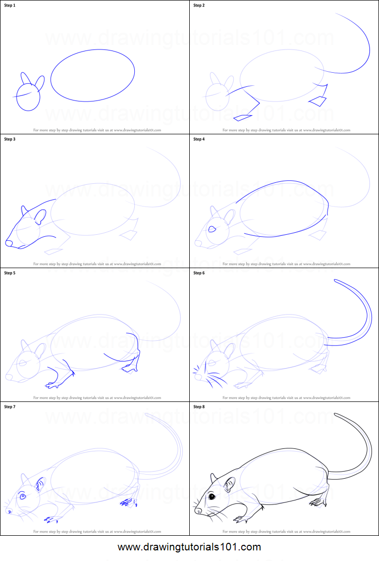 How to Draw a Rat printable step by step drawing sheet ...