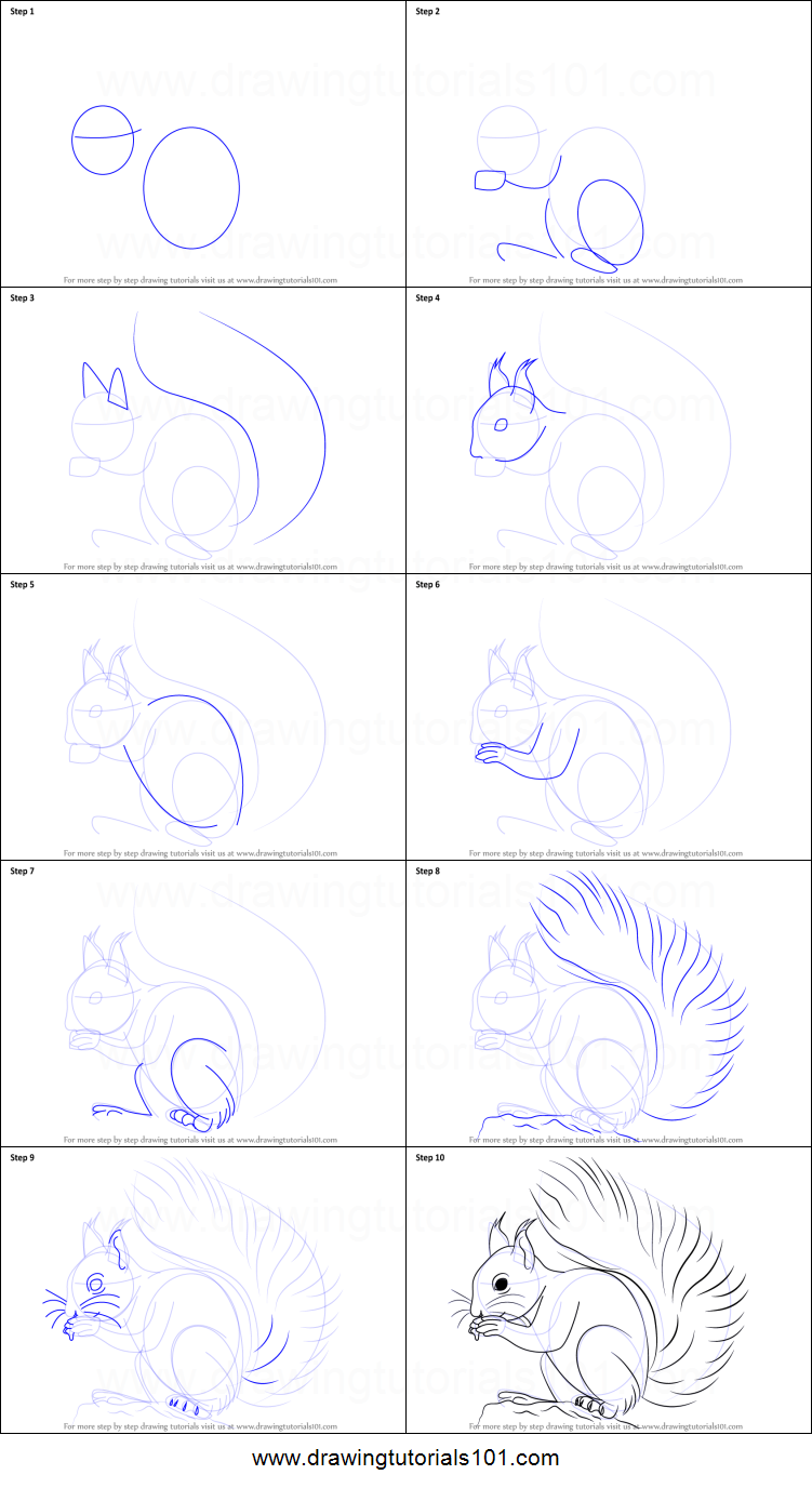 How to Draw a Red Squirrel printable step by step drawing sheet