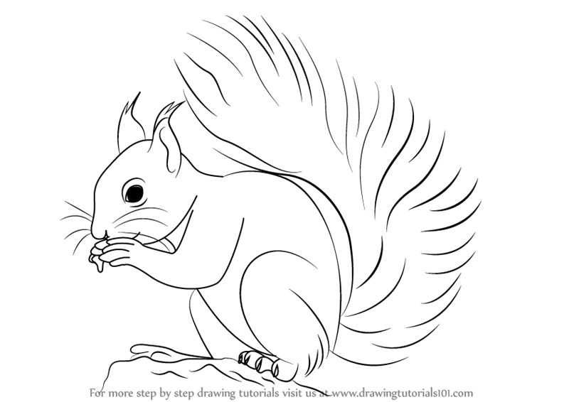 Line Drawing Squirrel : Learn how to draw a red squirrel rodents step by
