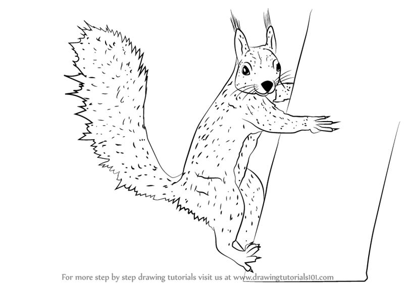 learn how to draw a squirrel climbing a tree rodents step by step