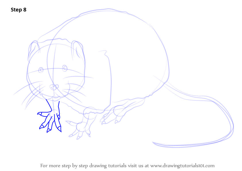 Learn How to Draw a Water Rat (Rodents) Step by Step ...