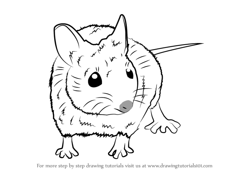 Drawing Lines With Mouse C : Learn how to draw a wood mouse rodents step by