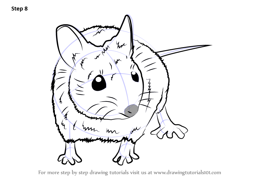 Learn How to Draw a Wood Mouse