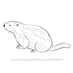 How to Draw a Woodchuck
