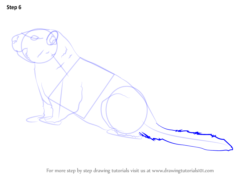 yellow bellied marmot coloring pages - photo#5