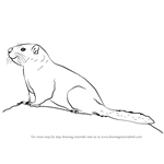 How to Draw a Yellow-Bellied Marmot