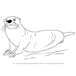 How to Draw an African Clawless Otter