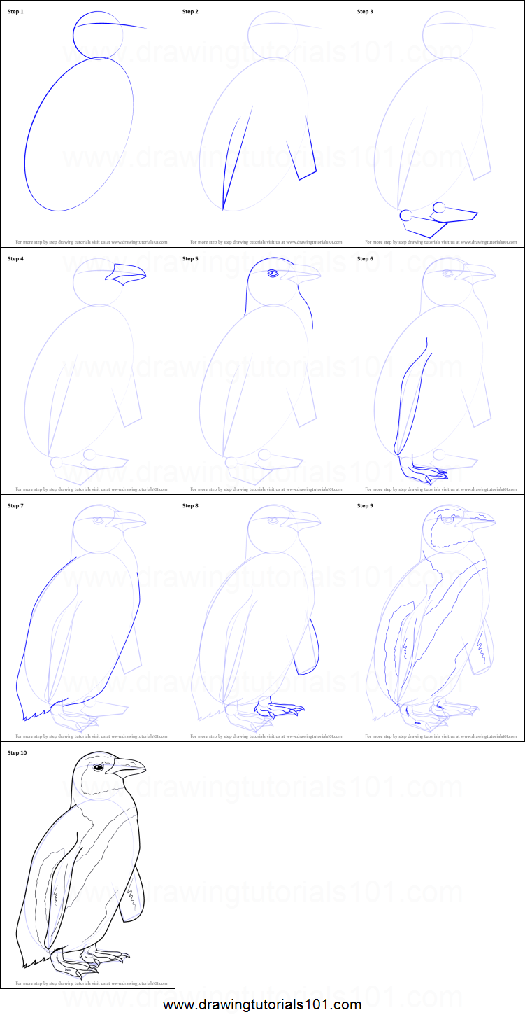 How to Draw an African Penguin printable step by step ...