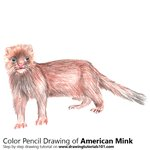 American Mink Color Pencil Sketch