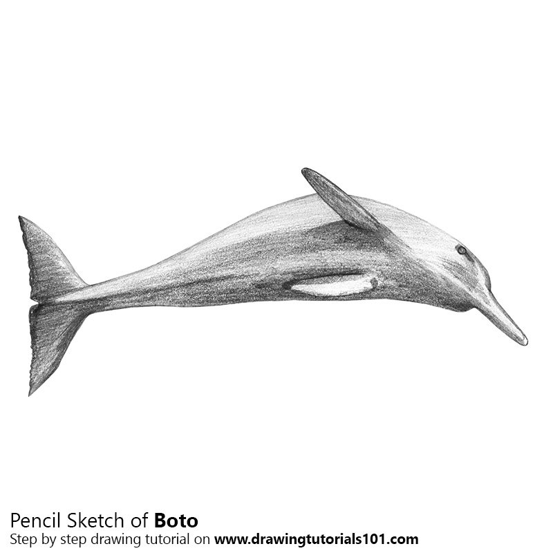 Pencil Sketch of Boto Dolphin - Pencil Drawing