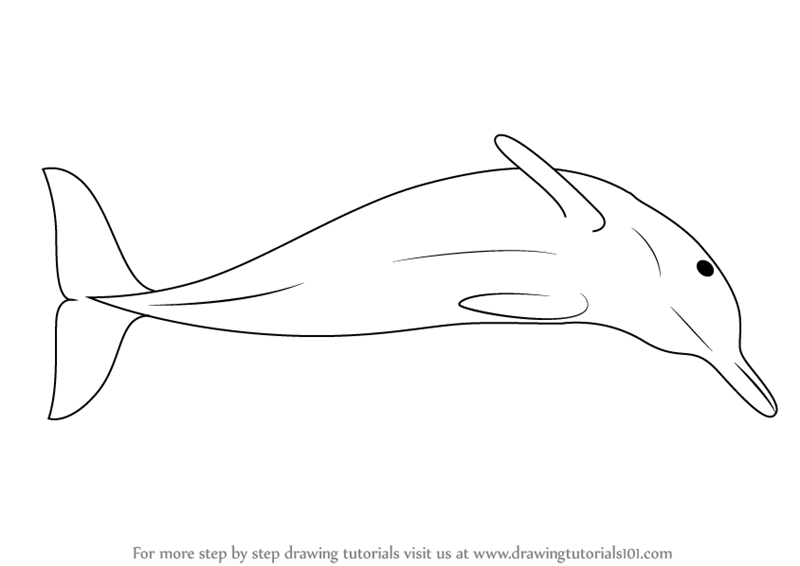 Line Drawing Of Water Animals : Learn how to draw a boto dolphin sea water animals step