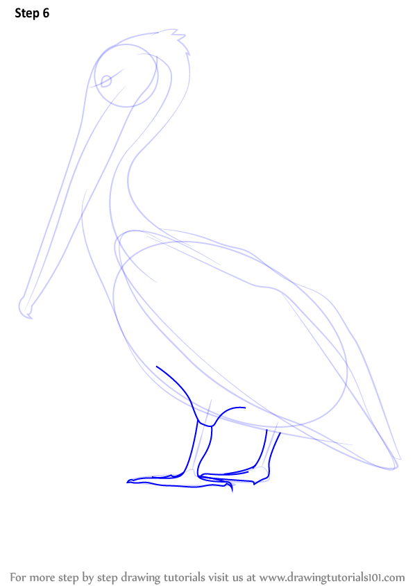 Step by step how to draw a brown pelican for How to make doodle art