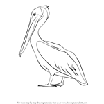 How to Draw a Brown Pelican