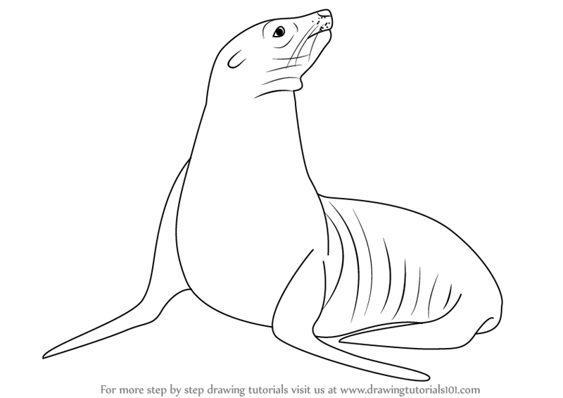 Line Drawing Of Water Animals : Learn how to draw a california sea lion water animals