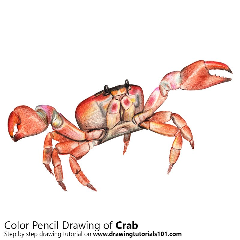 Crab Color Pencil Drawing