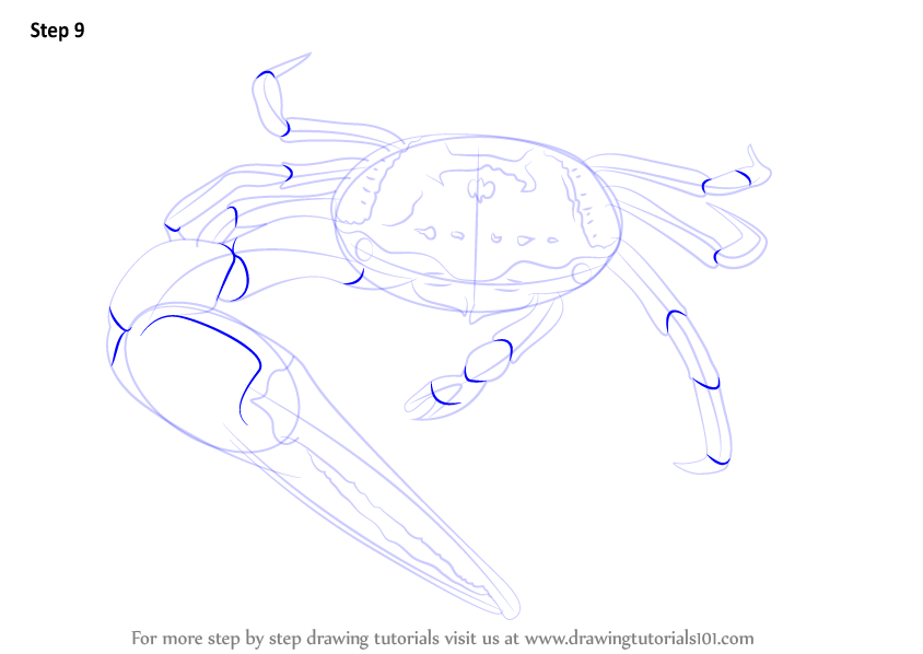 Line Drawing Of Water Animals : Learn how to draw a fiddler crab sea water animals step
