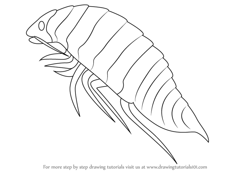 Learn How to Draw a Isopoda Sea