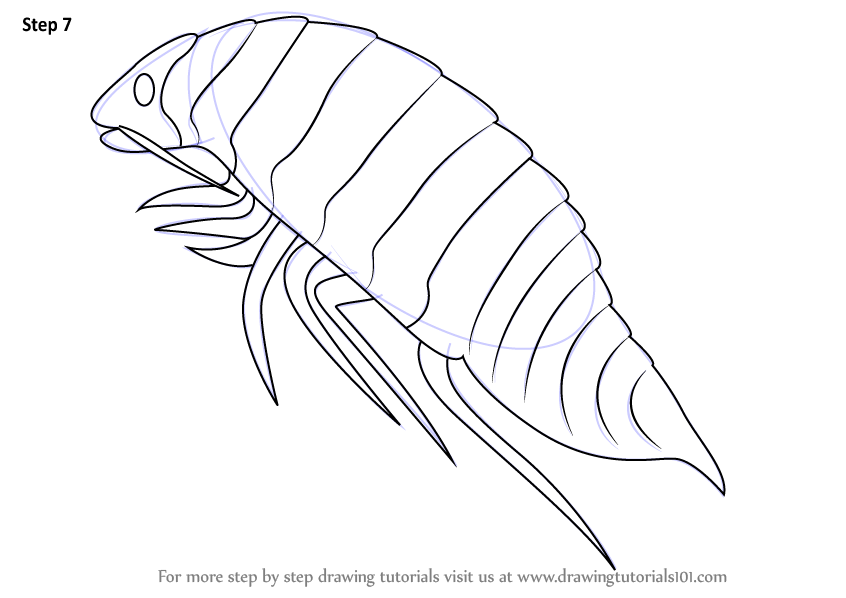 Learn How To Draw A Isopoda Sea Water Animals Step By