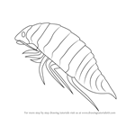 How to Draw a Isopoda