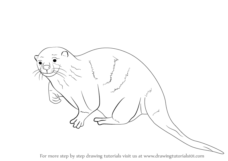 Learn How To Draw An Otter Sea Water Animals Step By Step