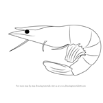 How to Draw a Prawn