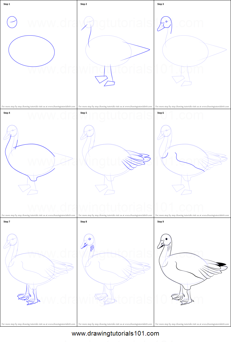 How To Draw A Snow Goose Printable Step By Step Drawing Sheet DrawingTutorials101