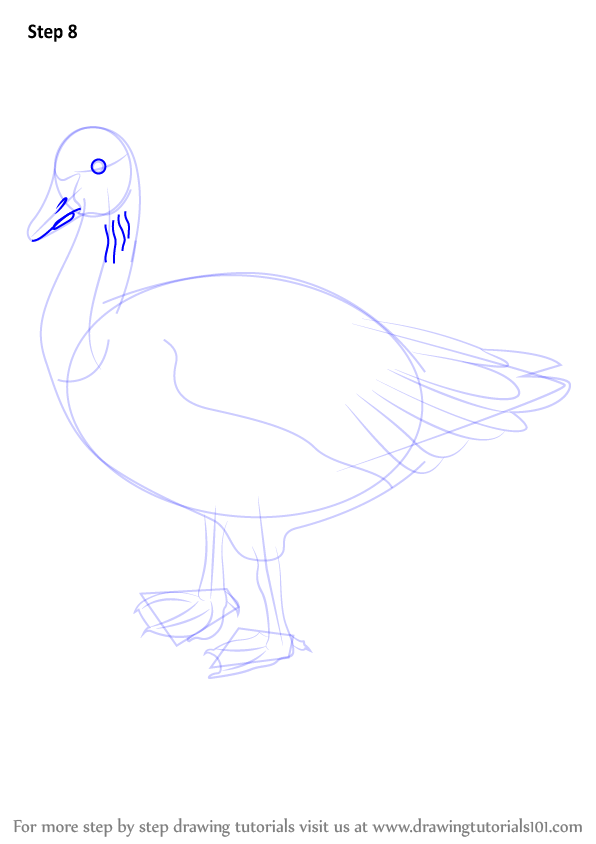 how to draw a goose in water