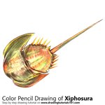 How to Draw a Xiphosura