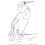 How to Draw an African Darter