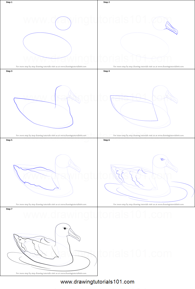 How to draw a albatross printable step by step drawing for How to make doodle