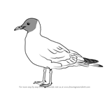 How to Draw a Black-Headed Gull