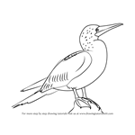 How to Draw a Blue-Footed Booby