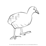 How to Draw a Coot