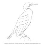 How to Draw a European Shag