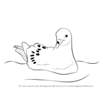 How to Draw a Fulmar