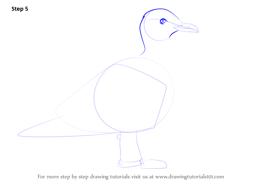 how to draw a gull