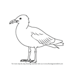 How to Draw a Herring Gull