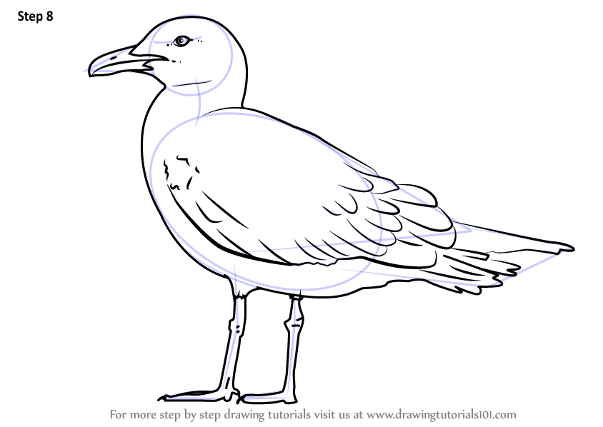 Step By Step How To Draw A Lesser Black Backed Gull