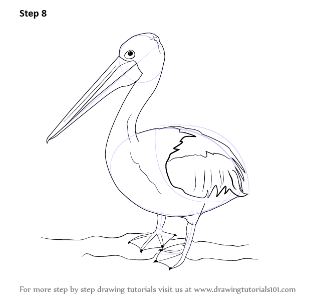 How To Draw A Pelican on simple body