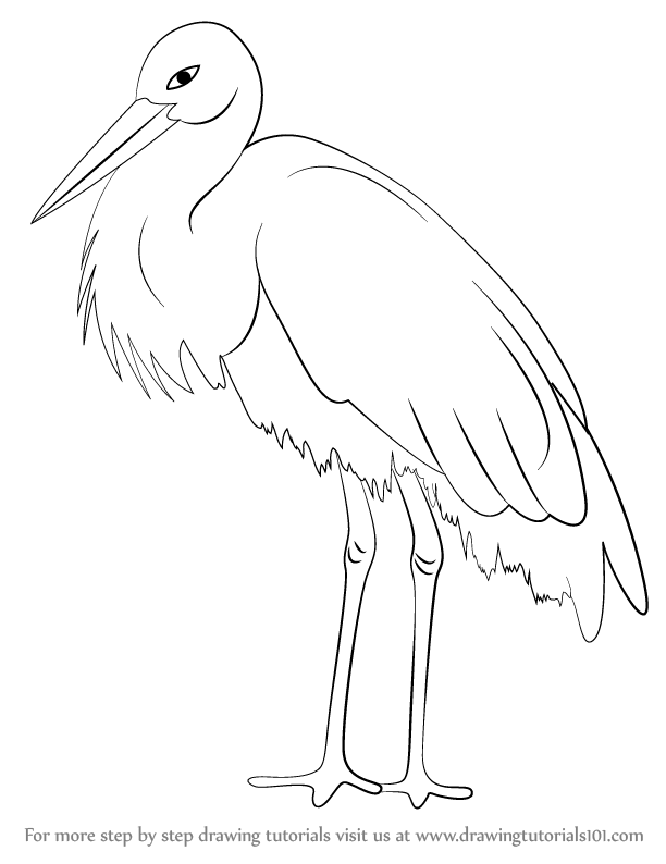 How To Draw Stork Free Download Oasis Dl Co