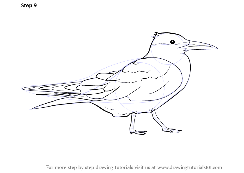 White Tern Drawing Now Complete The Figure With