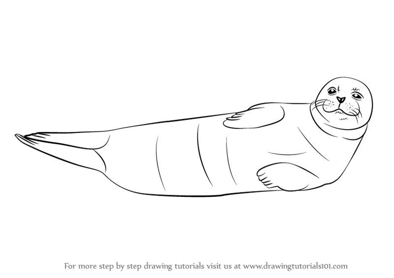 How to Draw a Realistic Seal, Cape Fur Seal, Step by Step, Sea ...