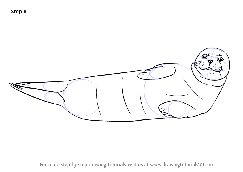 Learn How To Draw A Harbor Seal Seals Step By Step