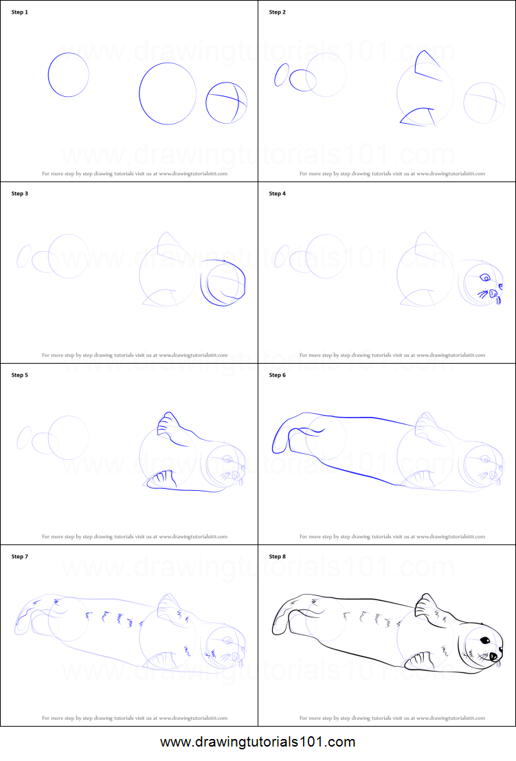 how to draw a harp seal printable step by step drawing sheet