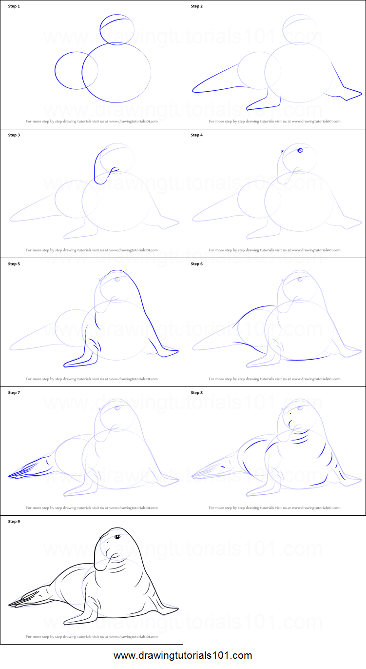 Uncategorized How To Draw A Seal Step By Step how to draw a southern elephant seal printable step by drawing sheet drawingtutorials101 com
