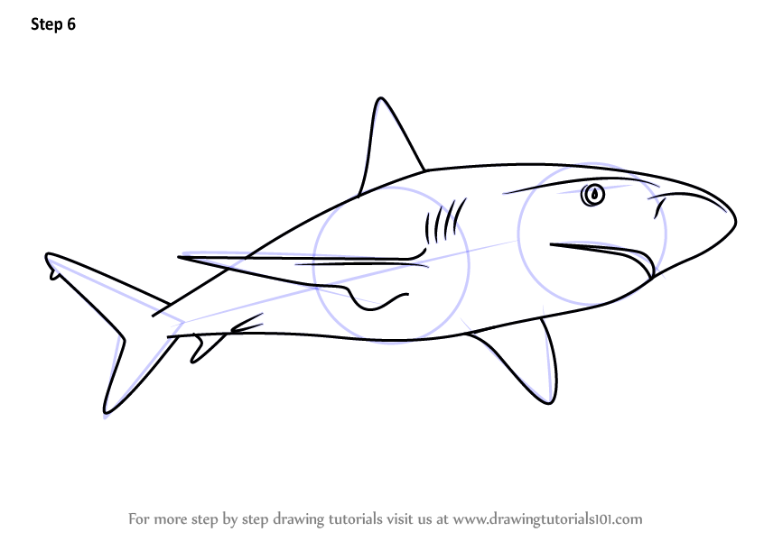 how to draw a bull shark step by step