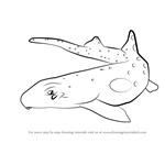 How to Draw an Epaulette Shark