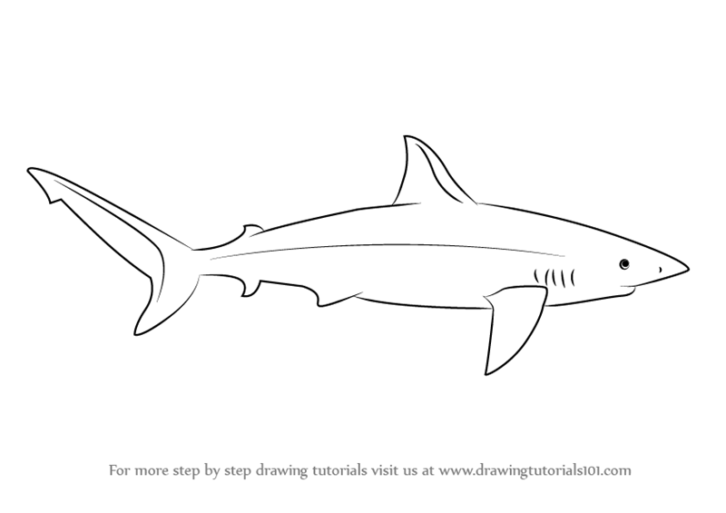 how to draw a great white shark. how to draw sharks ...