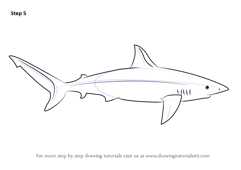 Learn How to Draw a Galapagos Shark