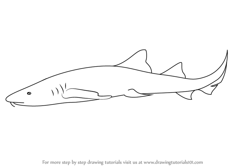 Learn how to draw a nurse shark sharks step by step drawing tutorials